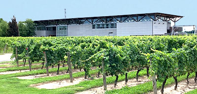 Jackson Triggs Winery in Niagara on the Lake Real Estate country